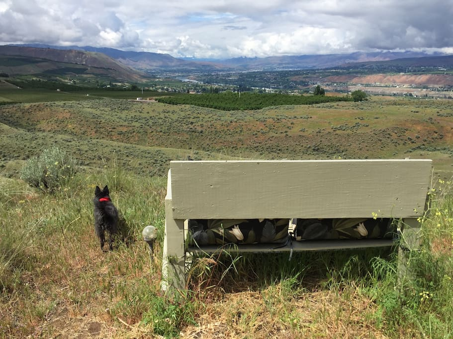 Penny the Tiny Dog checks out the view from the Lookout Point bench after a spring rain.