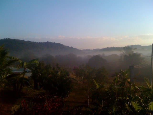 Natural Beauty of Misty Valley 1