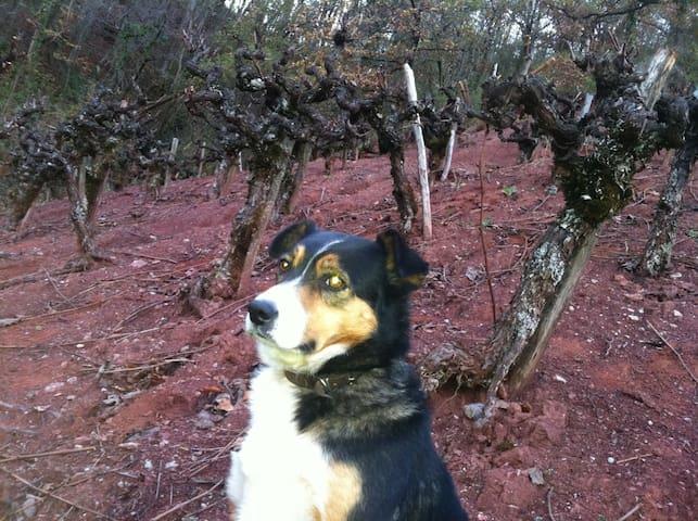 Notre vigne avec notre compagnon