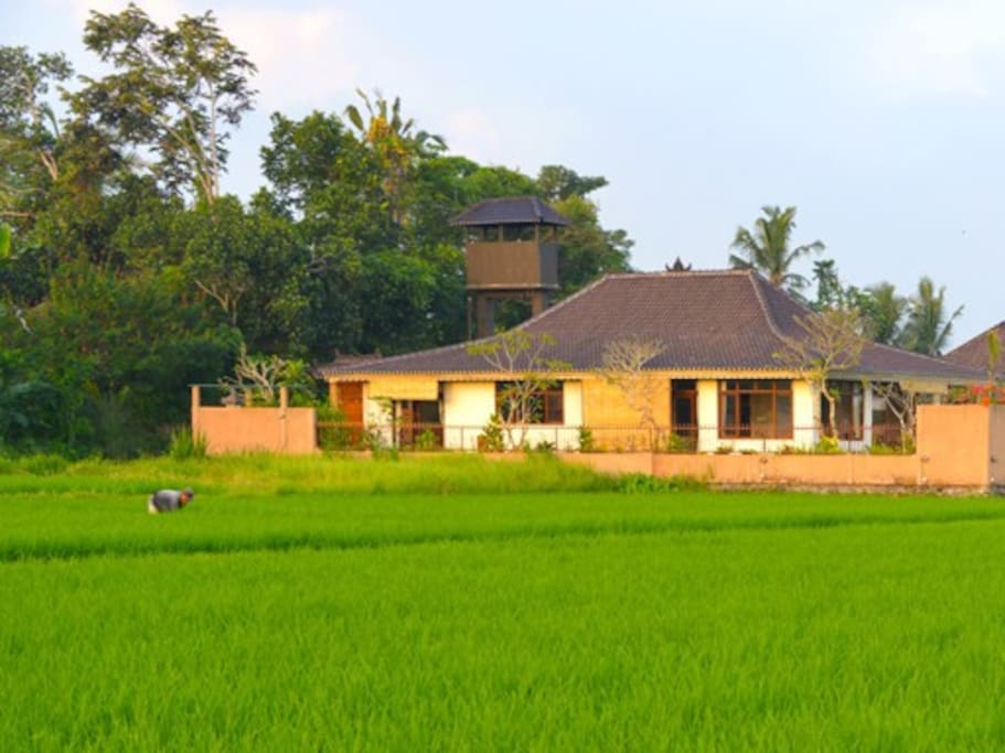 villa intani from the west across the rice fields