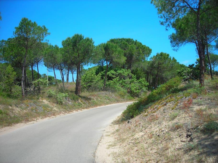 Driveway entrance to village