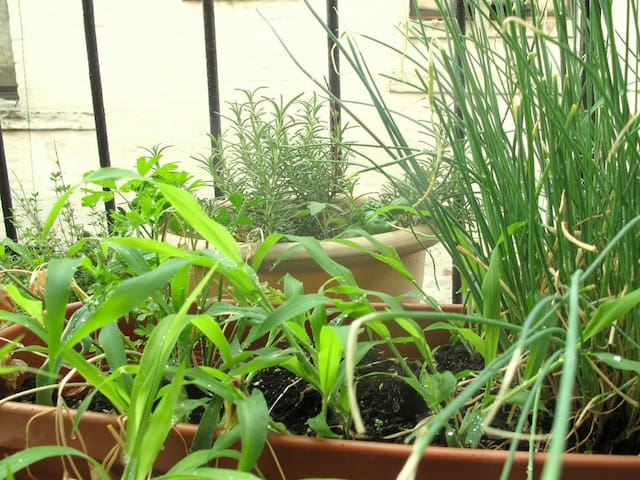 Herb Garden off the kitchen.  Thyme, Oregano, Rosemary, Chives and Peppers.