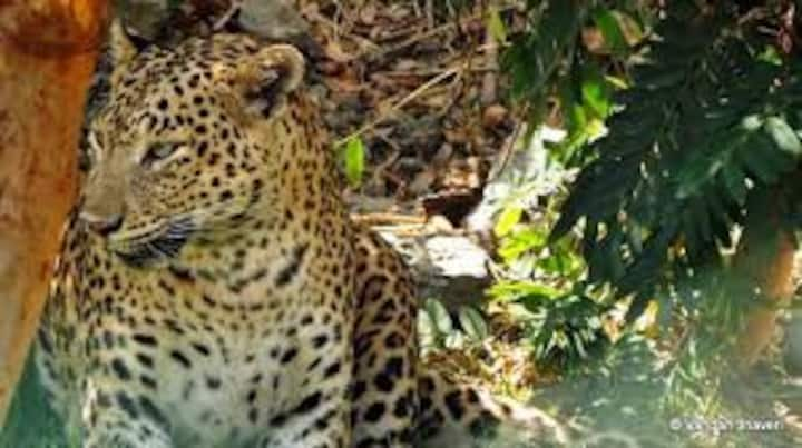 Visit Leopard Lair and Stay With Nature in Hillsin