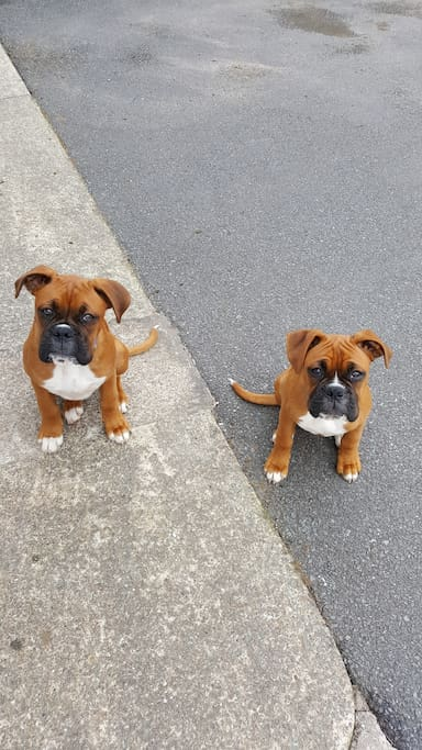 Cooper & Bella