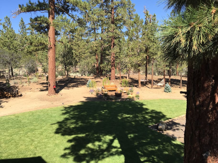 Gorgeous Lawn & 5 Beautiful Acres - all yours