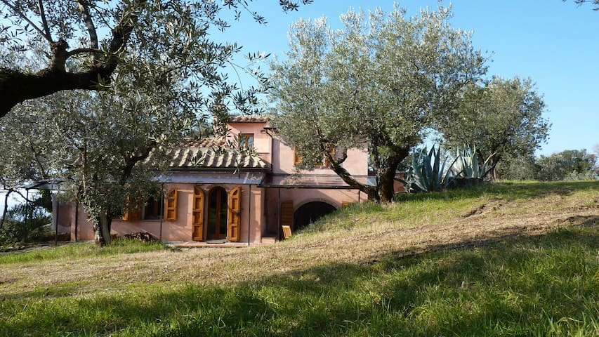 Extended rustico within old olive trees - Roccatederighi