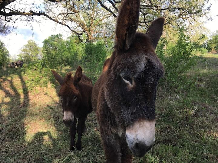Gîte pour 6 avec Piscine, Mas des 3 ânes à Blars