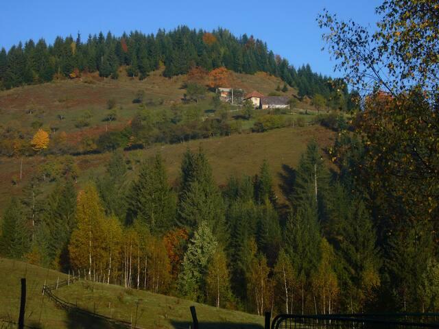 Дом в горах на Златаре - Nova Varoš - House