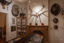 Museum - Mammal Room