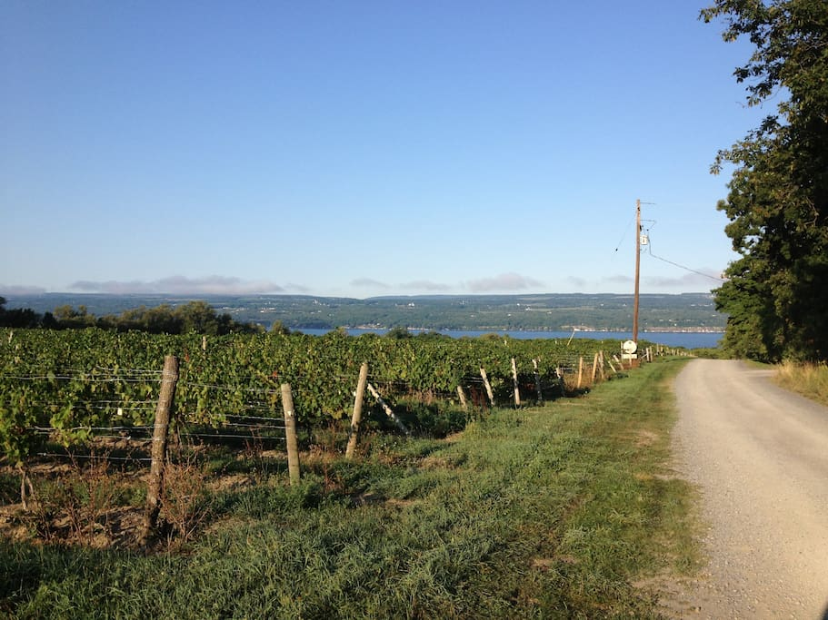 Drive past 1.25 miles of grapes and even a vineyard as you wind your way down Caywood Road.
