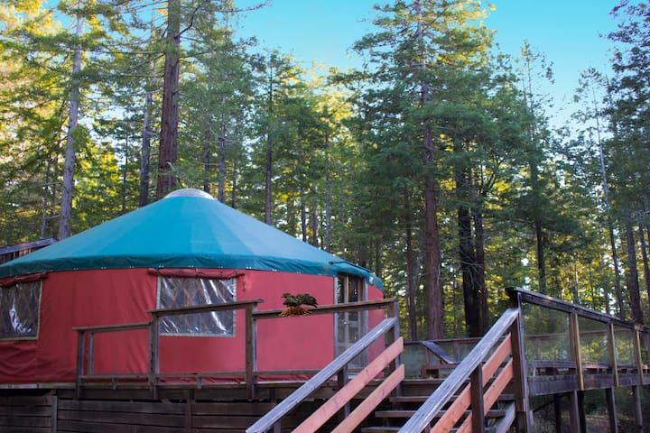 Peaceful Yurt in Redwoods