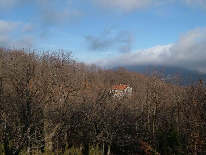 Casa nel bosco - Nature getaway