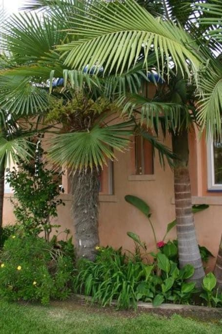 palm trees in front of house.