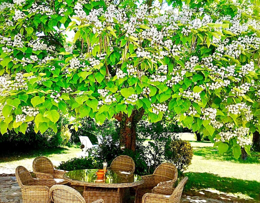 The Catalpa tree offers welcome shade on the terrace.