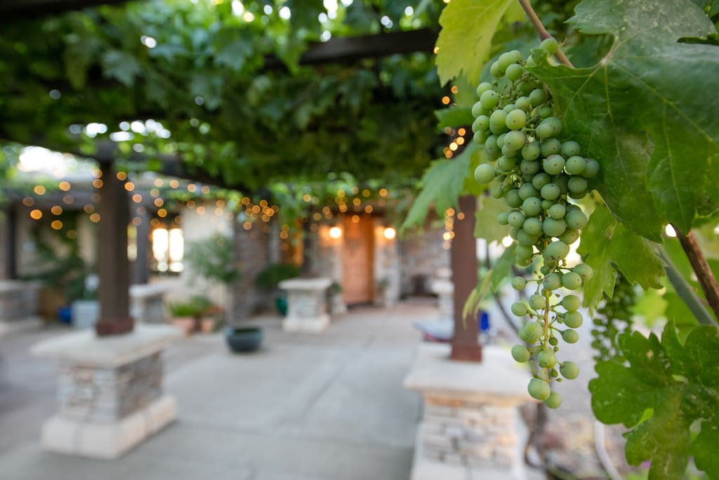 Grapes and festive lights line walkway in summer.