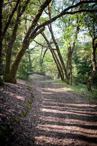 A winding path through the trees.