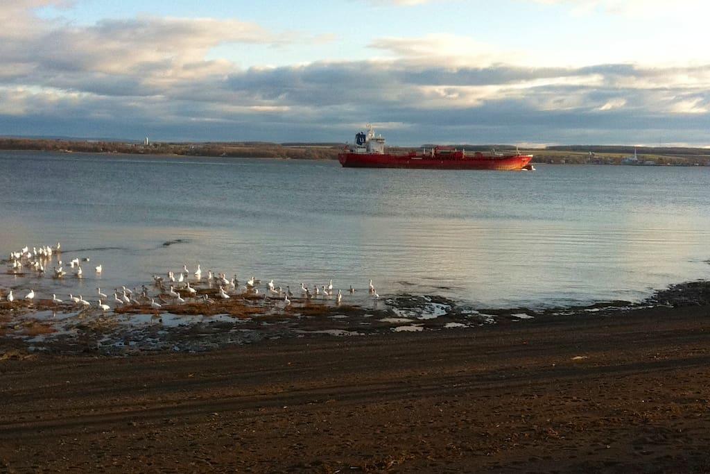 Magnifique vue sur le fleuve St-Laurent.