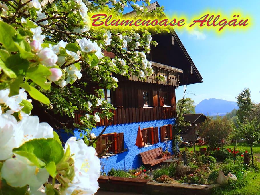 Blumenoase Allgäu