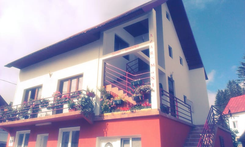 B&B-Apartment near bus station - Žabljak - Bed & Breakfast