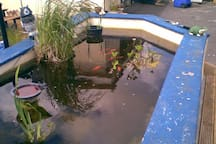 Our fishpond