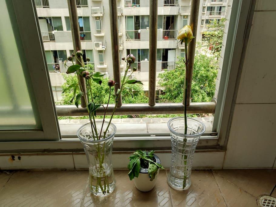 自己养的植物