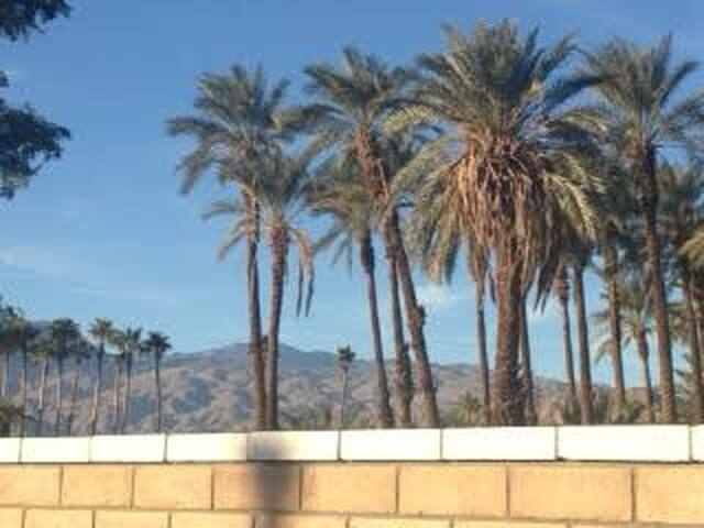 Desert palm and mountain view