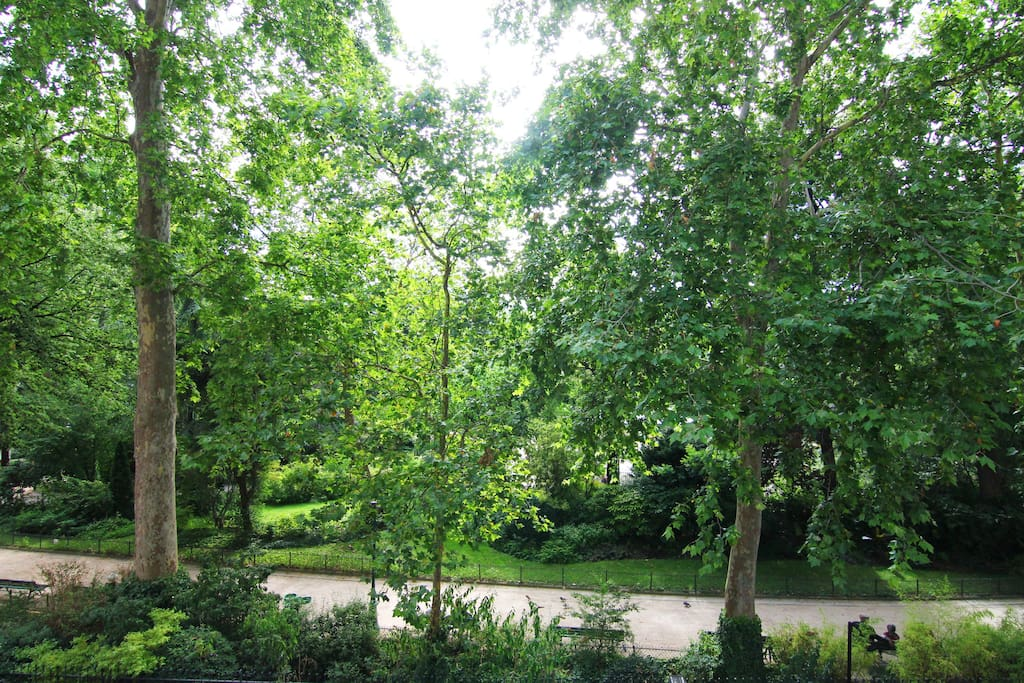 view on the garden from the balcony