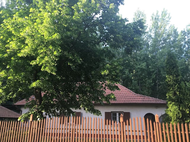 Csongrád Home by the forest, close to the river
