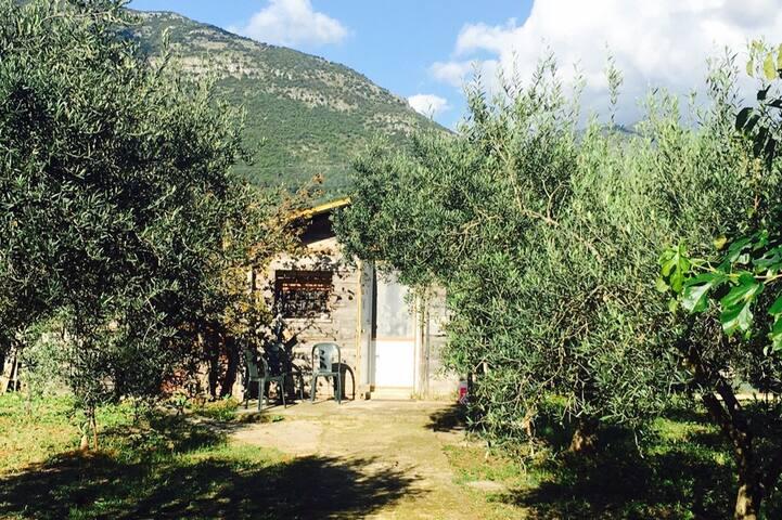 Casetta tra gli ulivi - Terracina - Dom