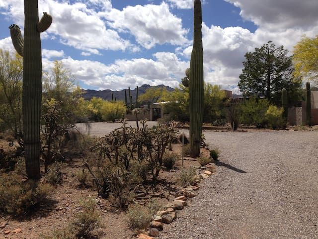 Serenity in the Saguaro Forest - Tucson - Haus