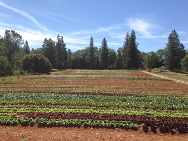 Farm in early summer. We sell locally at several farmers markets.