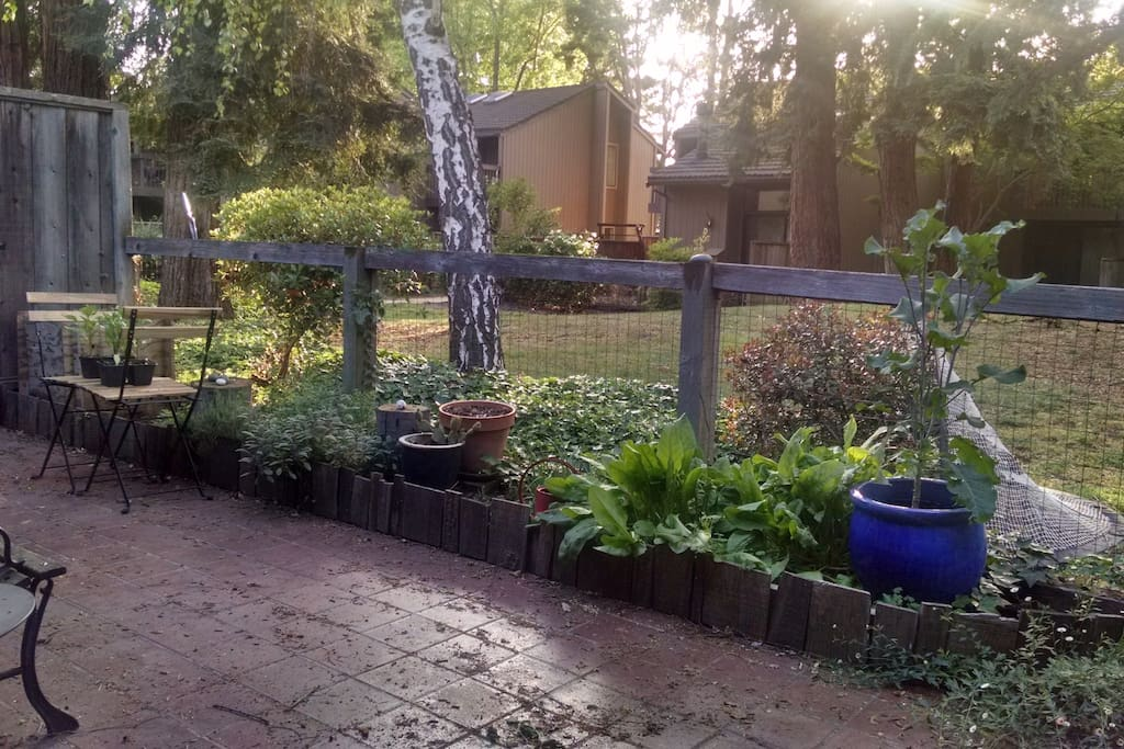 Back porch with herb garden