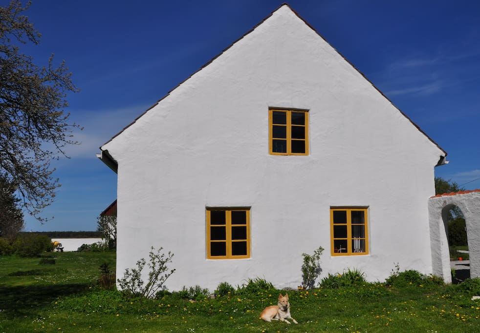 The south east gable with our dog Elsa in the front.