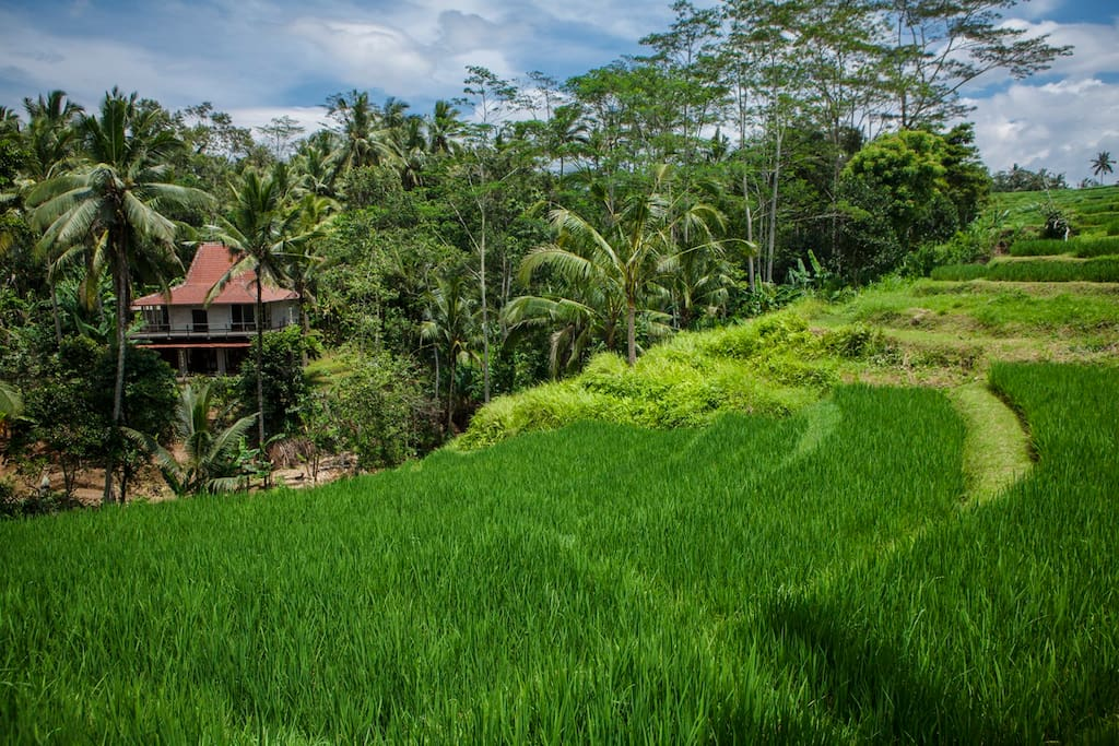 Our house from our rice terrace. To get to this part , you just need to cross the wooden bridge over the small stream.