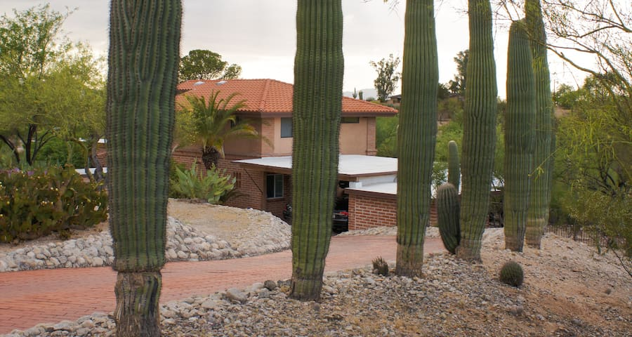 The view from the street shows the driveway lined with huge saguaro cactus.