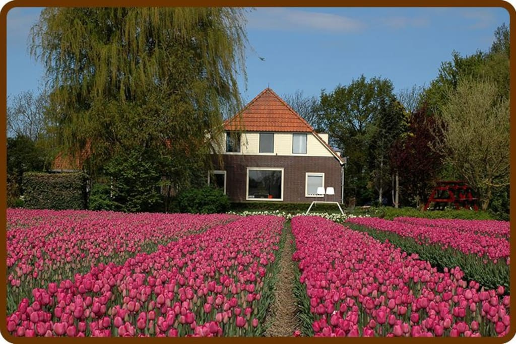 The Noordoostpolder area is characterised by agriculture, fruit growing, tulip fields and the tulip route.