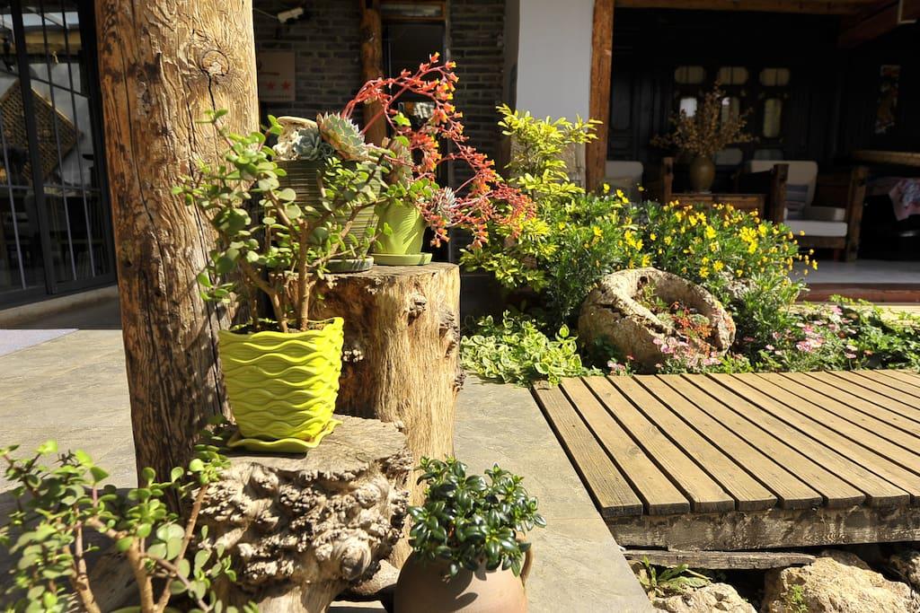 内院的鲜花四季不断。