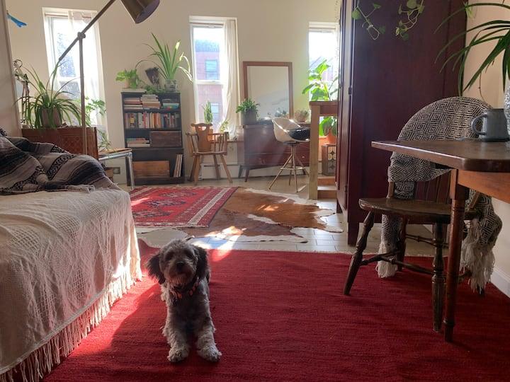 sunny studio in trendy red hook