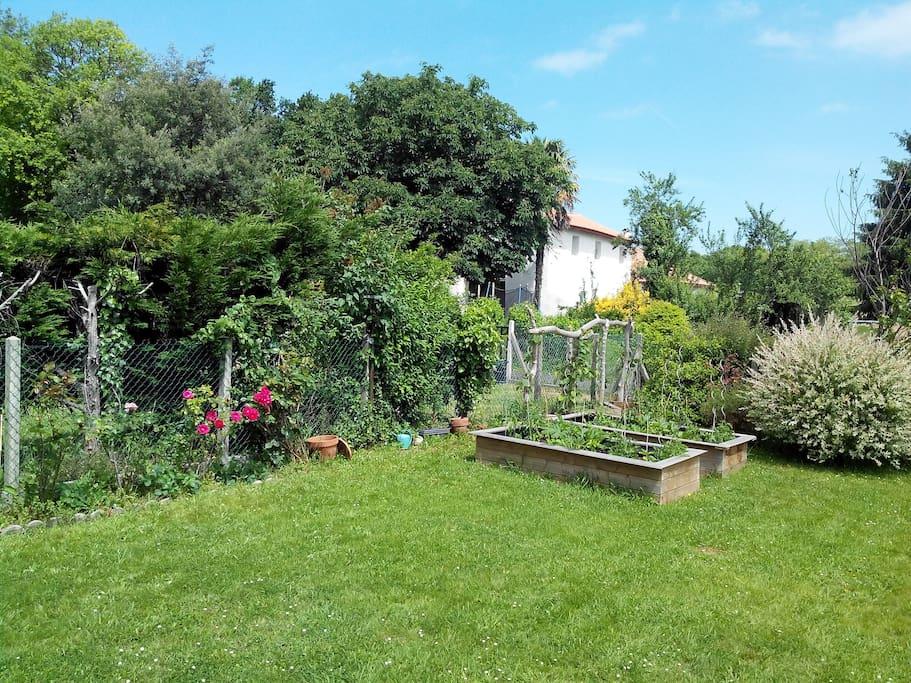 View on the vegetable garden, healthy dinner in prospect