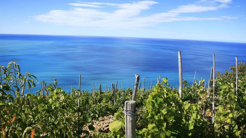 Full Optional per vacanze al mare - Albiano Magra - Wohnung