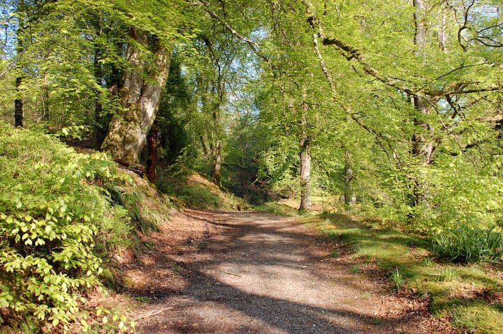 Path with beech and oaks