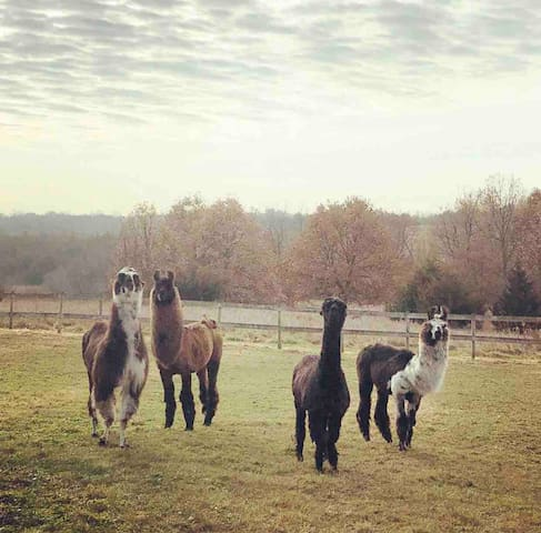 Nature Retreat with Llamas at Prairie Patch Farm