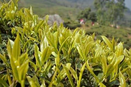 Live amidst the fresh fragrance of tea