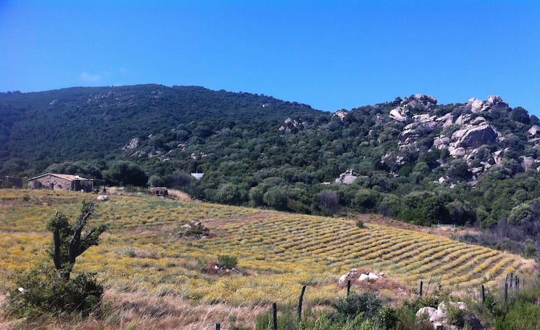bergerie saparella - Sartène