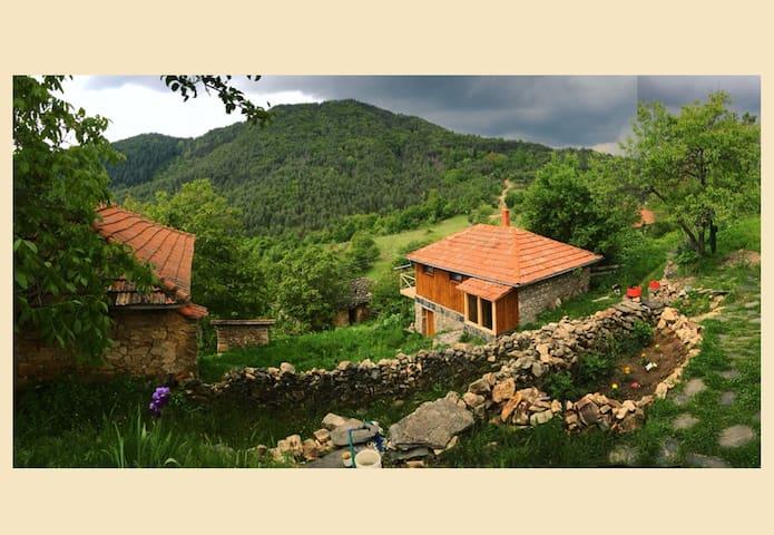 Forest Utopia: Stargazer's Refuge - Slivka