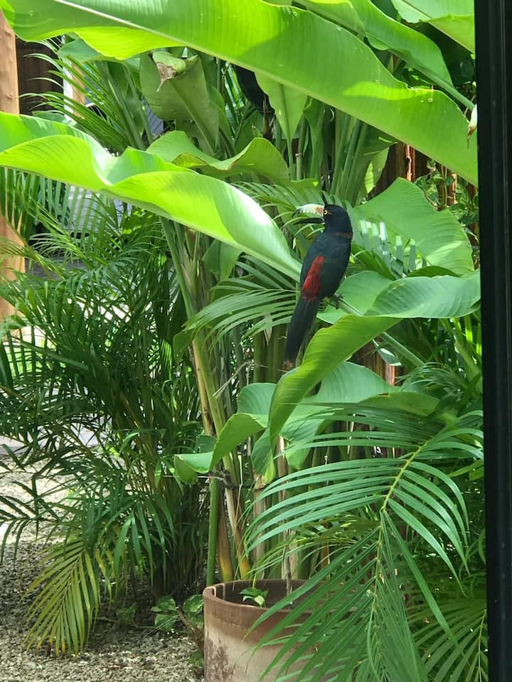 Mangle de Poza Clara Sanctuary Hotel
