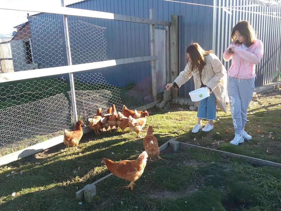 Guests often enjoy feeding our chickens &  sheep in the mornings.....