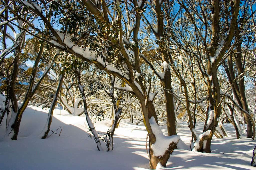 Sun Apartments are nestled among the beautiful snow-gums