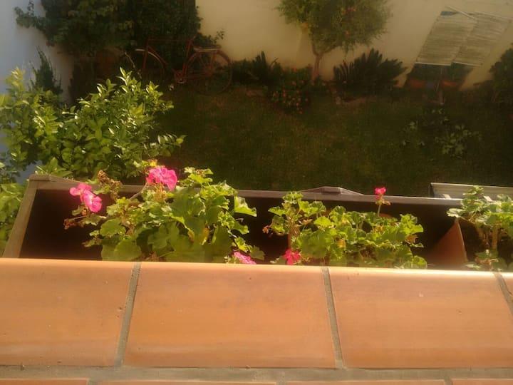 Malvones en flor