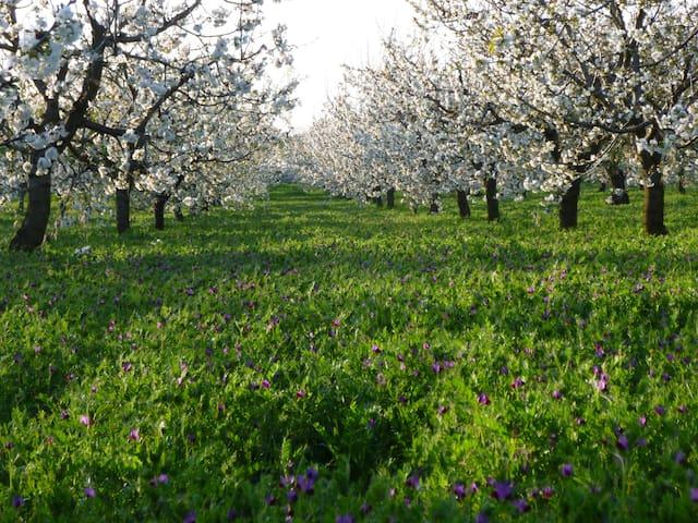 Il Giardino dei ciliegi Juniorsuite - Turi - Bed & Breakfast